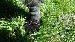 angus-allergy-socks